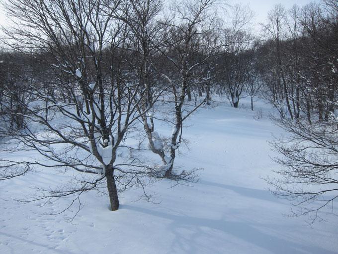 沢城地形での雪崩回避行動