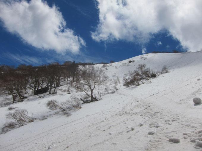 雛岳山頂付近の写真