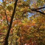 10月20日キノコ採り アイキャッチ