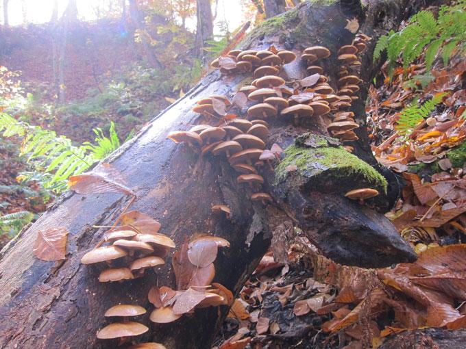 昨年のナメコの木の写真